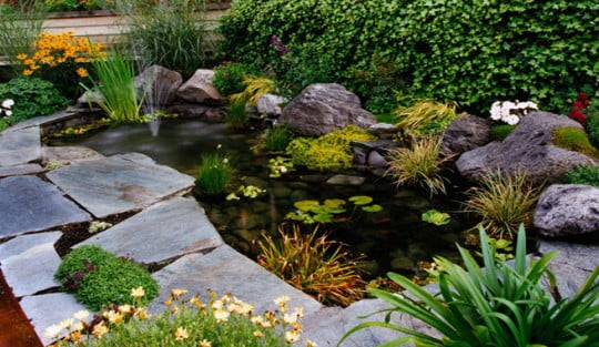 Small+pond+in+landscaped+garden