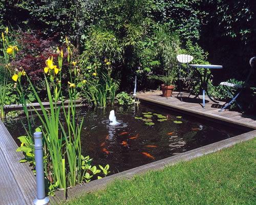 estanque-con-plantas-acuaticas