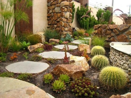 jardin-plantas-cactus-camino