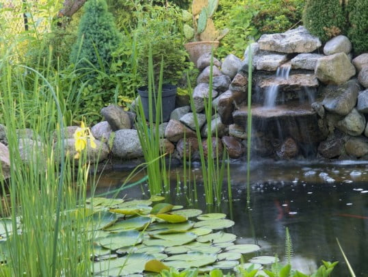 Ornamental pond with waterfall in garde