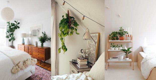Decoración de casas con plantas. | Constructora Paramount